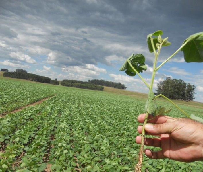 Laudo tecnico agricola