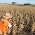 Laudos tecnicos agronomicos