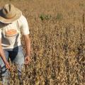 Serviços agronomicos