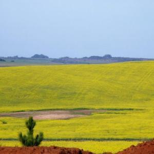 Cadastro ambiental rural rio grande do sul